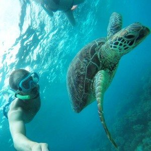 Hawksbill turtle, Great barrier Reef, Snorkeling