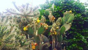 Plants, Australia, Cactus, Melbourne