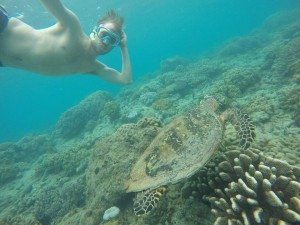 Great Barrier Reef, GoPro Hero 4, Turtle, Underwaterlife, Selfieturtle, Scubadiving, Snorkeling, Adventure, Backpacking, Campervan, Cairns, Whitsundays