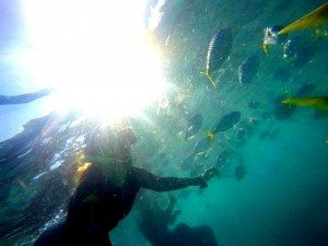 Whitsundays, Fish, Snorkeling
