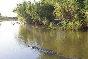 Crocodile, Yellow Water Cruise, Yellow Water Billabong, Kakadu National Park, CHAPTERTRAVEL