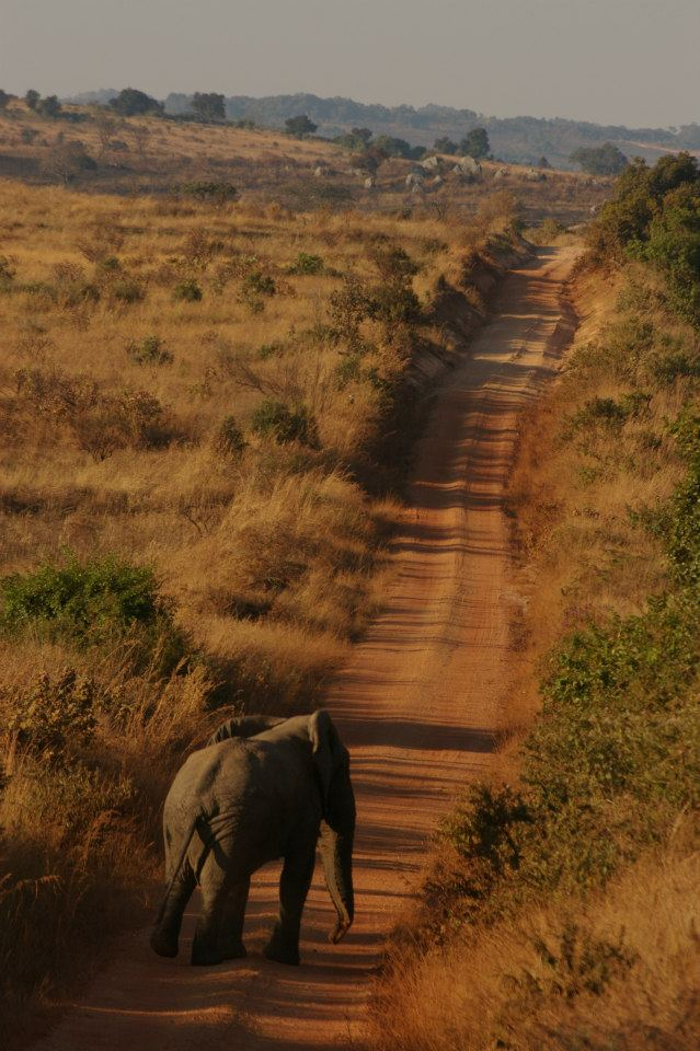 Interview of the month November Rachel Heller, Rachel Heller, CHAPTER TRAVEL, Malawi, Peace Corps, interview of the month
