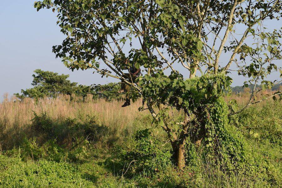 Chitwan National Park, Safari Walk, Jungle Walk, CHAPTERTRAVEL, chapter travel