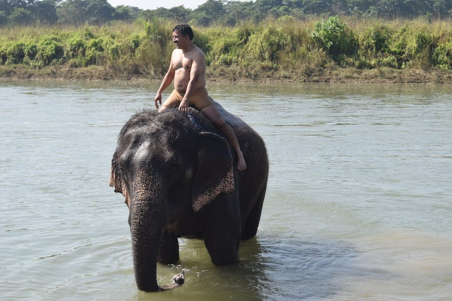 Elephant Bathing, Chitwan National Park, Sauraha