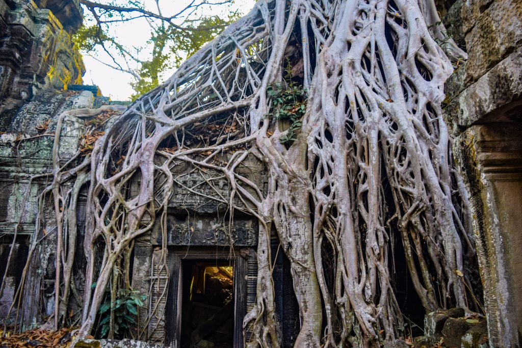 Three day itinerary Angkor Wat, Ta Prohm temple, Angkor Wat, tree though temple