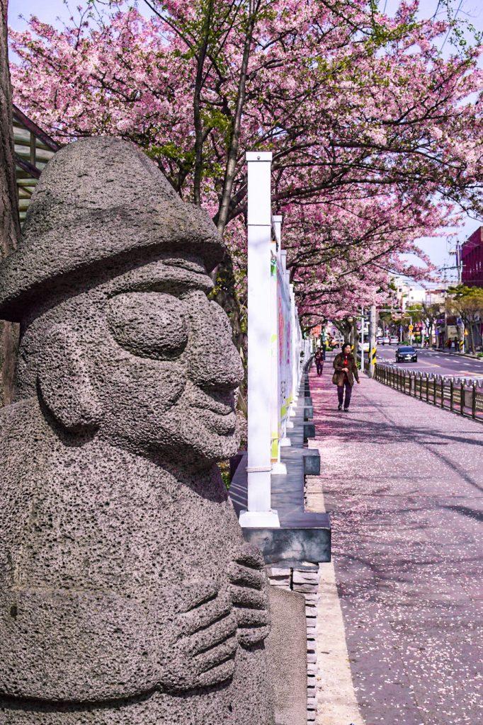 Where to eat on Jeju Island, Where to sleep on Jeju Island, Seongsan Ilchulbong Peak, Hallasan, Mount Hallasan, things to do on Jeju Island, Hotel RegentMarine The Blue, cherry blossom, spring in Jeju