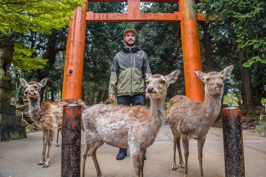 Nara is perfect for taking photos. The deer can be super sweet but also quite dangerous and aggressive.
