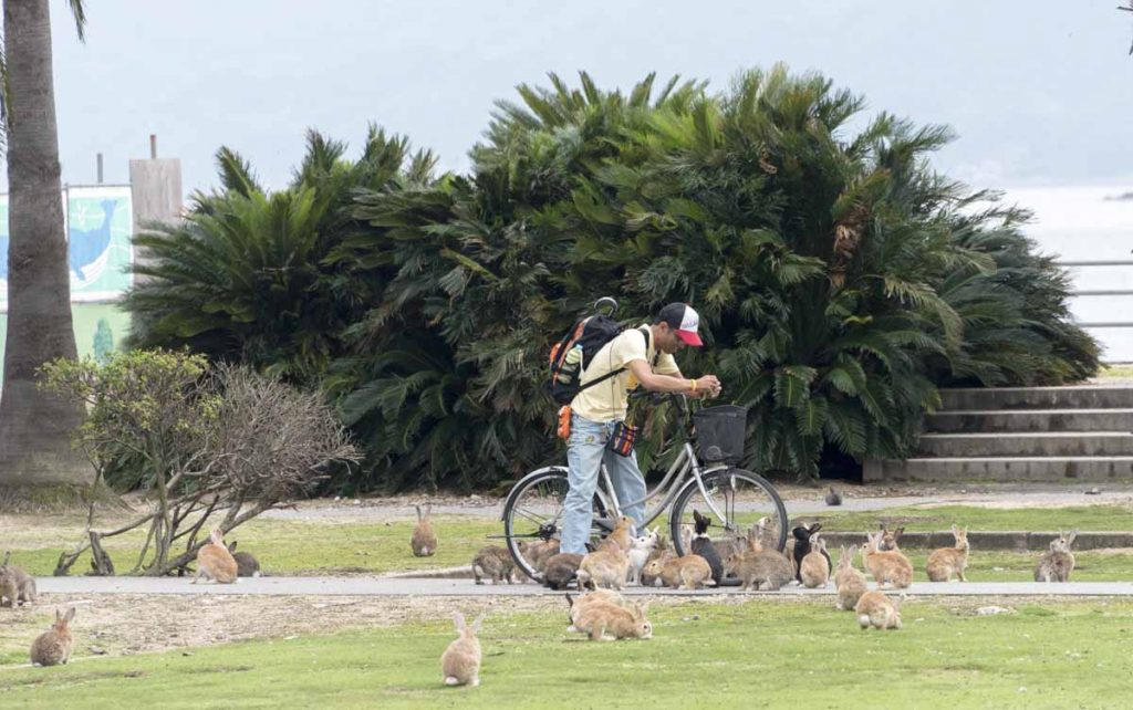 Okunishama is an island where rabbits roam happily and free. It wasn't always like that, as during the second world war Japan produced poison gas here.
