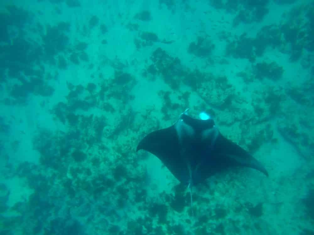 Coral Bay, Ningaloo Reef, Coral Bay Ecotours, White Pristine Beaches, Australia, Adventure Travel, CHAPTERTRAVEL, Manta Ray