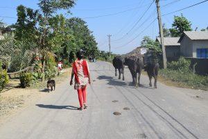Local people and buffalos, Nepal, Sauraha, Chitwan National Park
