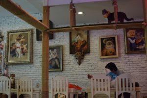 Interior Caturday Cat Café, Things to do in Bangkok, Cat Café