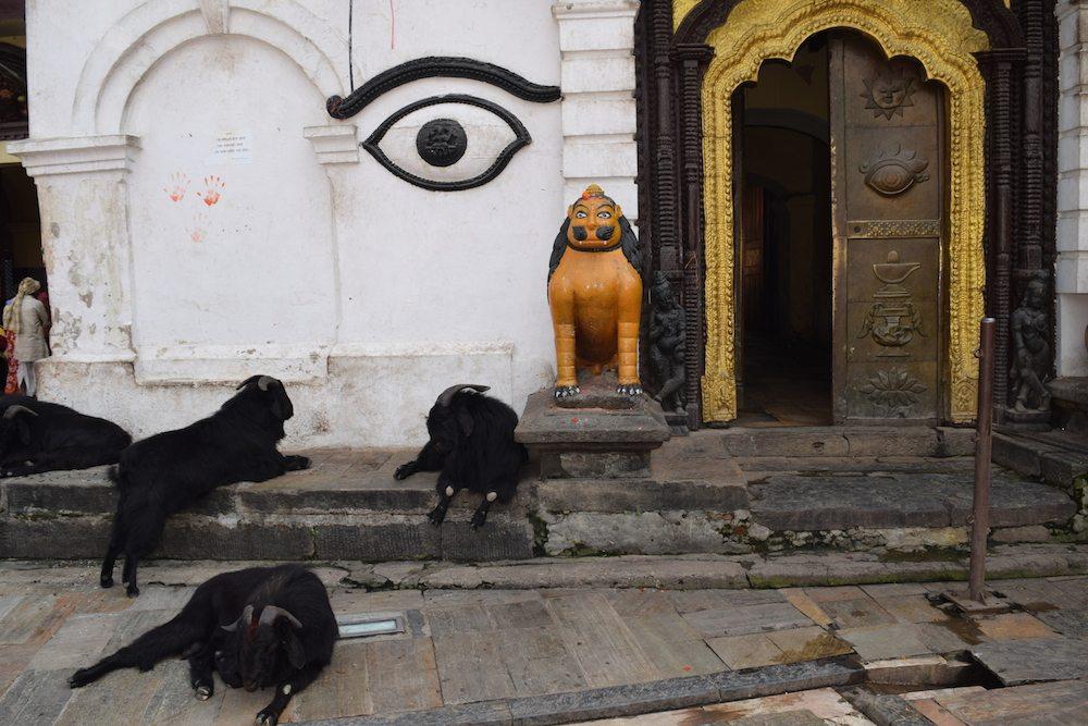 Visit Pashupatinath, Things to do in Kathmandu, Temple in Kathmandu, temples in Kathmandu