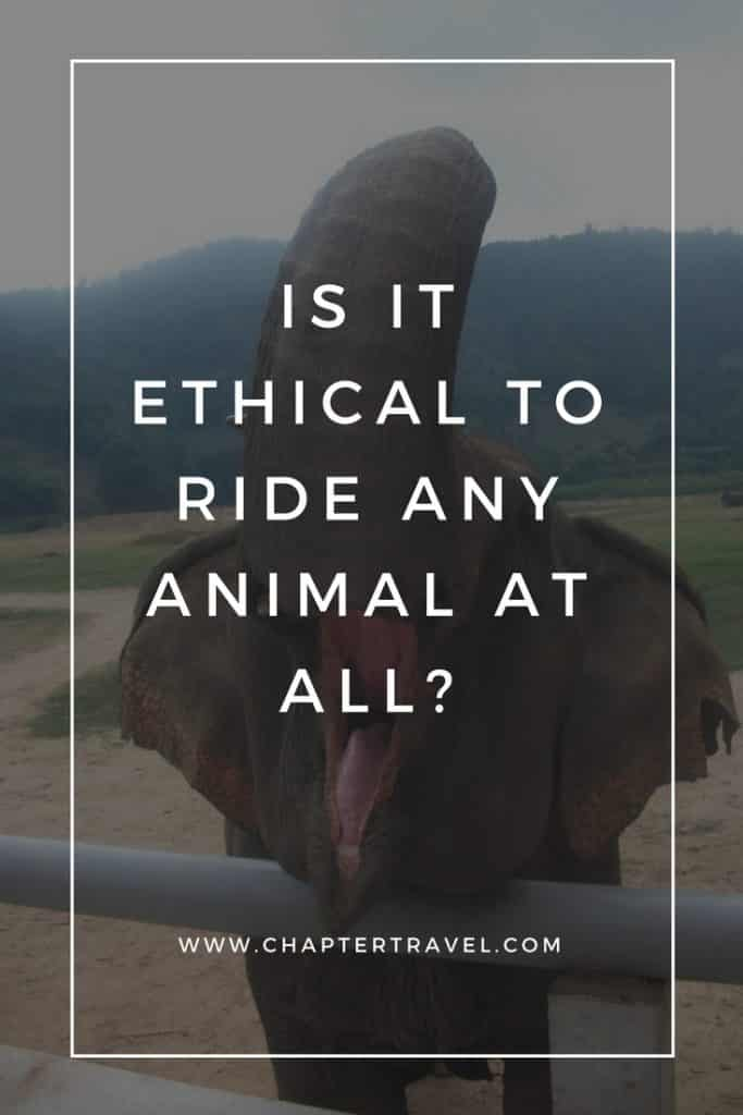 Is it ethical to ride any animal at all, ethical travel, stop animal abuse, animal abuse, elephant riding, stop elephant riding, don't ride animals, responsible travel