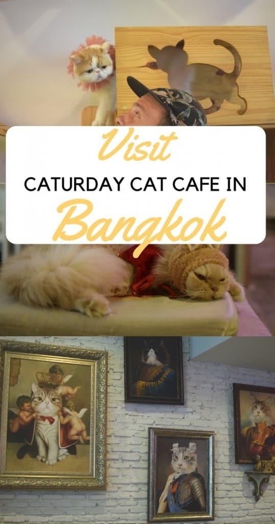 Caturday Cat Café in Bangkok, Cute Cafes in Bangkok, Cute Café in Bangkok, Bangkok restaurants, themed café Bangkok, themed restaurants Bangkok, Cat restaurant Bangkok, Cat Café Thailand, Where to eat in Bangkok, Must-see in Bangkok, Hidden gems in Bangkok, Non-touristy locations in Bangkok, Animal café in Bangkok, Bangkok Inspiration, things to do in Bangkok