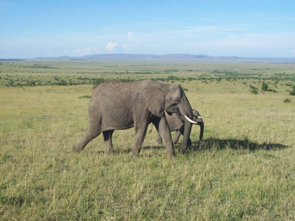Maasai Mara, Kenya, Interview of the Month March with Ella