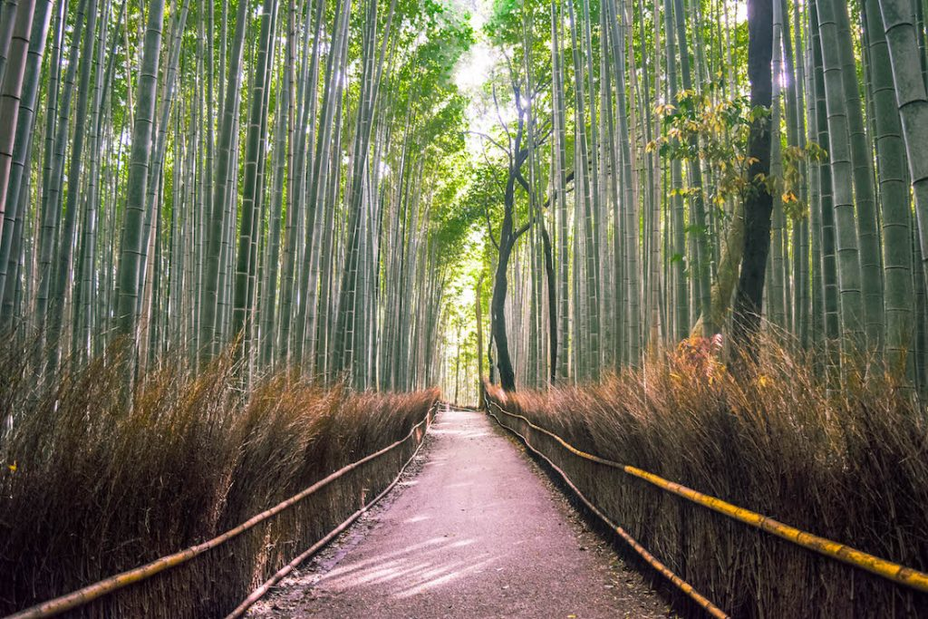 Arashiyama Bamboo Grove was a lot smaller than we thought, but we still really enjoyed it. You can take some excellent photos here! It's also one of the most iconic spots in Kyoto.